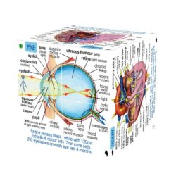 ZooBooKoo Human Body: Systems & Statistics (3D Scientific Cube Book)