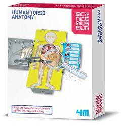 4M KidzLabs Science Museum Human Torso Anatomy