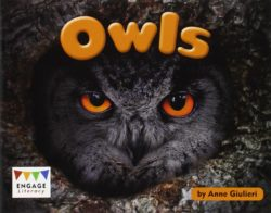 Owls (Engage Literacy Green)